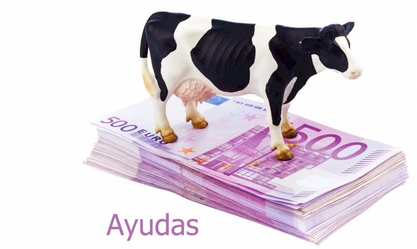Ayudas a la inversión y para jóvenes agricultores